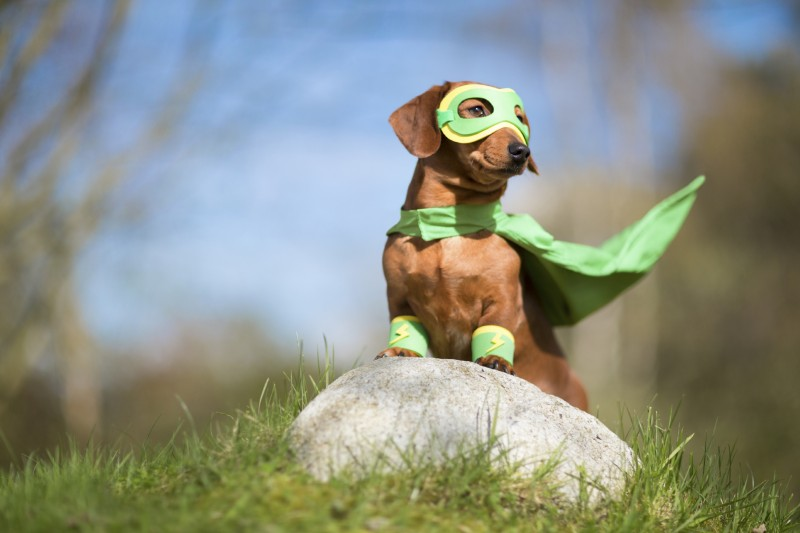Maked superhero dog on lookout