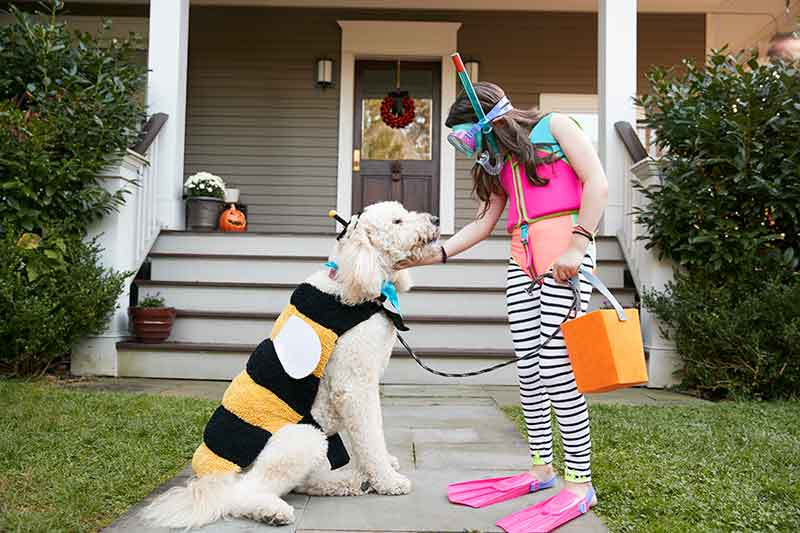 Pet costumes are a fun way to celebrate Halloween with Pets