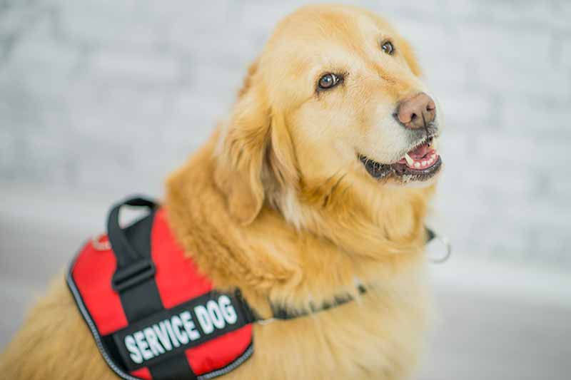 The service dog stigma is real.