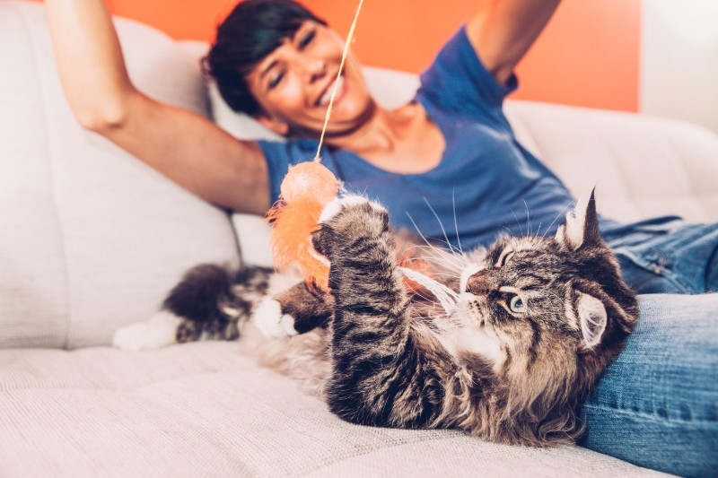 Adopting a cat can make you healthier!