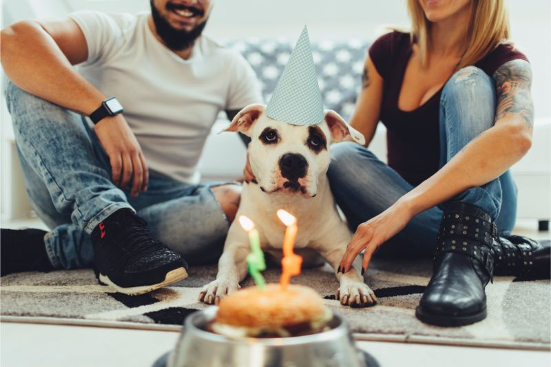 A dog wearing a party hat sitting in front of a birthday cake with his people on either side of him
