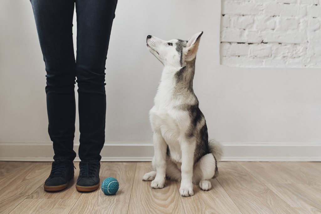 A human teaches a dog the leave it command